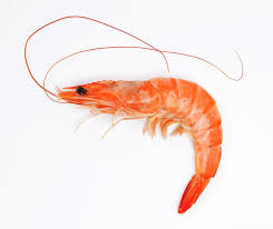 Balanced protein/energy diet may offer low-cost feed for farmed shrimp