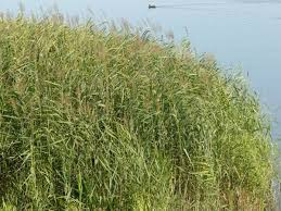 tall grass texture. Tall Grass Texture G