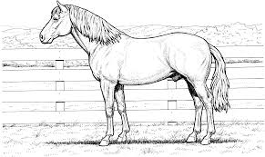 Realistic Horse Coloring Pages To Download And Print For Free