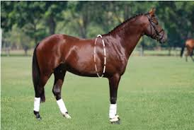 Hygain Horse Weight Calculator Online Weight Tool For Feed