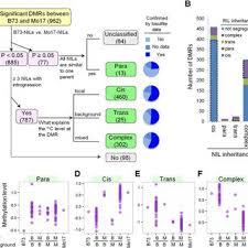 Dmr Inheritance Patterns In Nil Population A Flow Chart