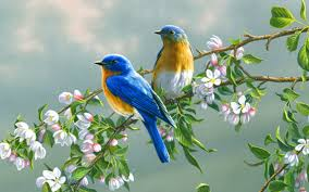 most beautiful flowers animated wallpapers. Unique Flowers Beautiful Birds Flowers Inside Most Animated Wallpapers S