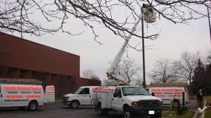 Bloomingdale Il Tree Lighting Roselle Electric Services Inc Chicago Suburbs Electricians