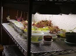 lighting indoor plants. plants directly under lights lighting indoor