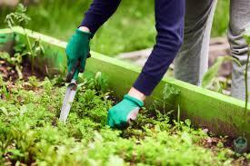 how to make weeding your garden super easy let a garden robot do it