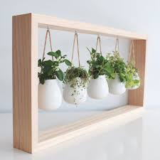 indoor herb garden in wooden frame