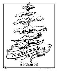Small Picture State Flower Coloring Pages Colorado State Flower Coloring Page