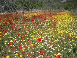 Resultat d'imatges de flors