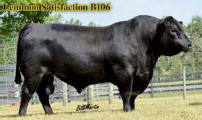 Beef Cattle Gestation Chart Beef Cattle Gestation Table Best Beef Image 2018