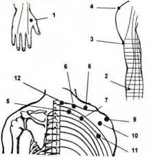 Точечный массаж при остеохондрозе шейного отдела точечный массаж
