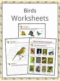 Bird Facts, Worksheets, Habitat, Diet & Information For Kids