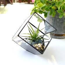 air plant terrarium diy terrarium cube square air plant terrarium by makerskit diy air plant terrarium