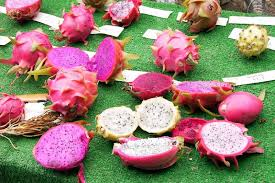 How To PLANTING DRAGON FRUIT  PITAHAYA  YouTubeHow To Take Care Of Dragon Fruit Tree