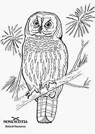 Kleurplaat Mandala Uil Collectie Adult Coloring Page Deco Ornate Owl