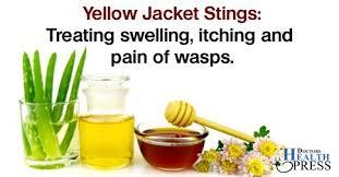 yellow jacket sting pain remedy