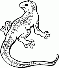 lizard animal coloring pages