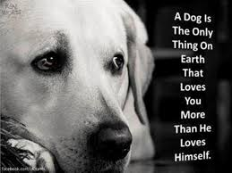 Pin by Myra Woods Keerl on True | Dog quotes, I love dogs, Dog love