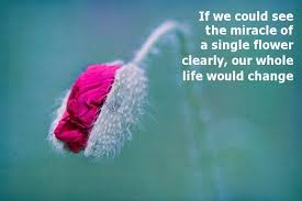 Beautiful Quotes For Status Best of Flower Status Short Quotes On Flower For Facebook Whatsapp
