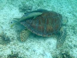 symbiotic relationships symbiotic relationship picture of maho beach cruz bay tripadvisor