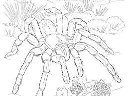 Small Picture Desert Animal Coloring Pages Coloring Page for Kids