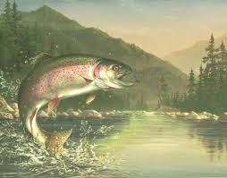 lake fishing wallpaper. Simple Fishing CHECK OUT THAT RAINBOW TROUT AFTER THE FLY WHAT A BEAUTI Wallpaper BordeR  Wall And Lake Fishing S