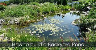 build pond water garden design backyard pond diy building guide idea