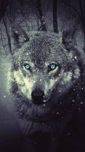 wolf wallpaper iphone 6. Interesting Wallpaper IPhone Wallpaper Forest Wolf Wolf Inside Wallpaper Iphone 6 G