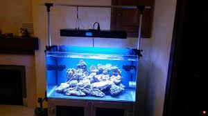 Plafo led it2040 [archivio] acquaportal forum acquario dolce e