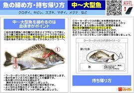 魚 締め 方