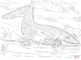 Small Picture Realistic Nile Crocodile coloring page Free Printable Coloring Pages
