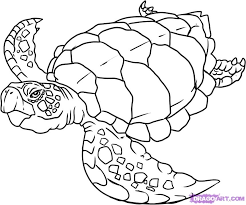 Small Picture How to Draw a Turtle Step by Step Reptiles Animals FREE Online