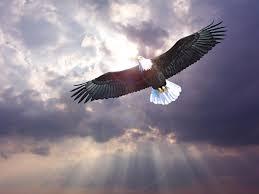 Αποτέλεσμα εικόνας για Αετός