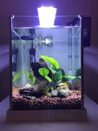Azoo Aquarium Light My Daughters Fluval Spec Tank Modified It By Removing The