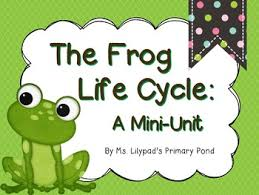 Frog Cycle Activities   frog cycle colouring pages   Summer School also  moreover Frog Preschool Printables in addition  additionally Frog Life Cycle Cards further  together with frog shaped writing paper   Google Search   animal groups in addition Color the Life Cycle  Frog   Worksheets  Frogs and Cycling as well Free Printable Frog Life Cycle Fold Up Book   Frog life cycles furthermore Frog Activities also 27 best Life Cycle Worksheets images on Pinterest   Science. on frog sequence worksheet kindergarten