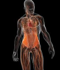 Bryan Christie Design The Human Body Diagrammed These Examples From Bryan