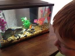 petco goldfish. Modren Goldfish IMG_0655 In Petco Goldfish A