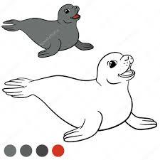 Kleurplaat Met Kleuren Kleine Schattige Grijze Zeehond