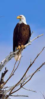 Eagle Tree Wallpapers - Wallpaper Cave