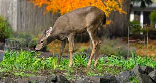 keep deer out of your garden