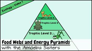 food web pyramid food webs and energy pyramids bedrocks of biodiversity youtube