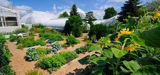 rooftop edible garden