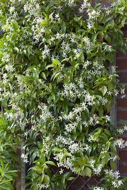 10 Fast-Climbing Vines for Your Garden. Fast Growing VinesFast Growing  PlantsFast Growing Privacy ...