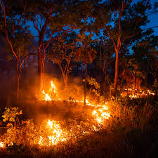 Is Fire Natural Light Reducing Fire And Cutting Carbon Emissions The Aboriginal