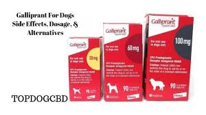 Dog Aspirin Dosage Chart Galliprant For Dogs Side Effects Galliprant Alternatives