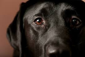 8 mon eye problems in dogs