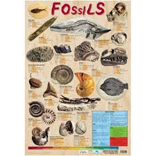 Fossils Information Chart Poster