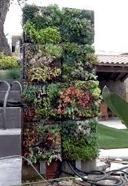 vertical succulent garden with