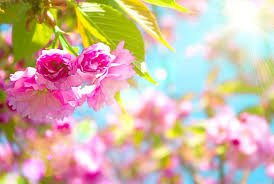 HD Spring Wallpapers for Desktop (83+ ...