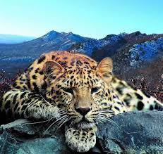 Land of the <b>Leopard</b> National Park is established
