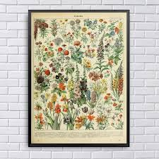 Different Types Of Flowers Fleurs Chart Adolphe Millot Art Canvas Fabric Poster Prints Home Wall Decor Painting